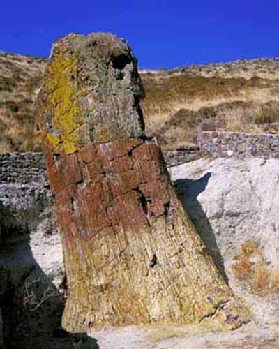 黄山与希腊莱斯沃斯石化森林地质公园缔结友好地质公园图片